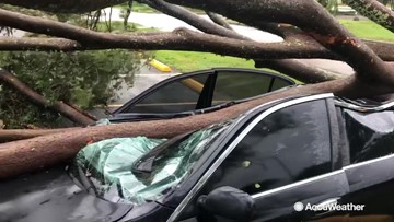 Terrifying sight as car found crushed by fallen tree