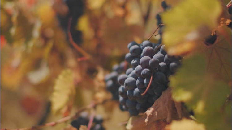 How climate impacts wine