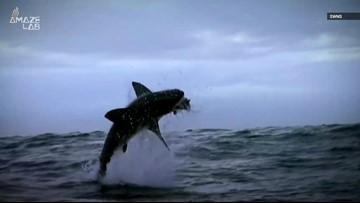 Great White Sharks Have Mysteriously Left One of Their Most Iconic Hunting Grounds