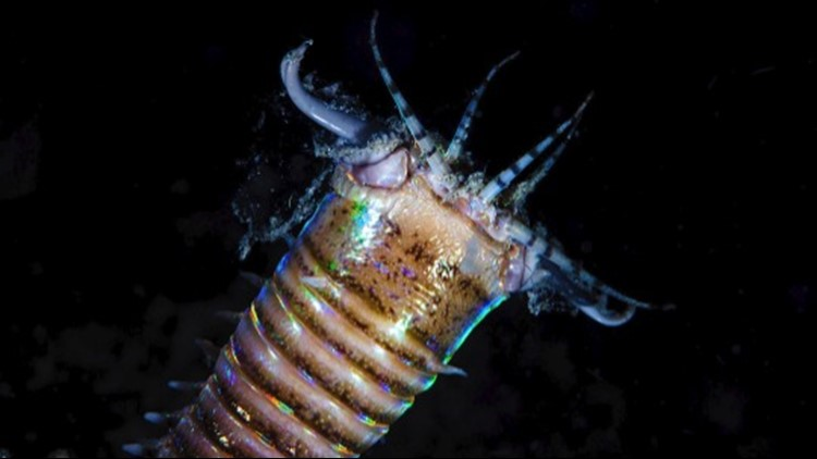 These Crazy Giant Monster Worms Roamed the Ocean Floor 20 Million Years Ago