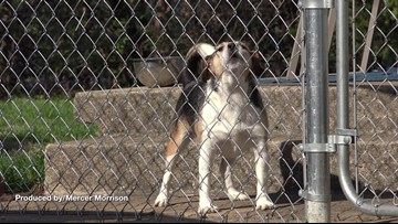 Dog Gone! City in New Jersey Proposes Banning Barking Dogs