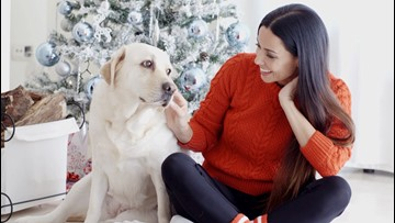 Amazing Gift Ideas for Your Dog, Including a Pawsecco Drink Set!