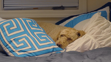Stuck Indoors? Keep Your Dog Entertained on a Snowy or Rainy Day