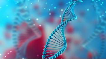 Scientists discover how gene mutation causes autism and intellectual disability