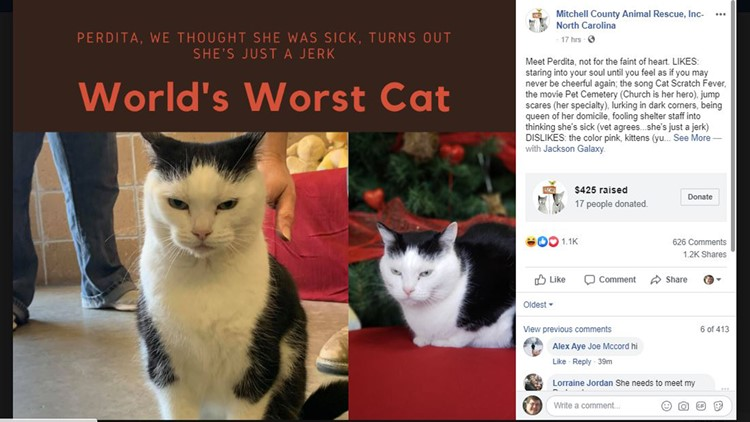 'She's just a jerk': Cat up for adoption in brutally honest ad