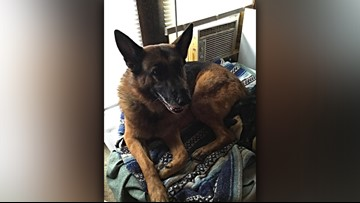Rescued German shepherd smells gas, saves Delaware family