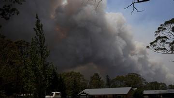 Heroic dog Patsy saves hundreds of animals in Australia bushfires