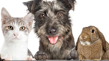 California bans sale of dogs, cats, rabbits not from shelters, agencies