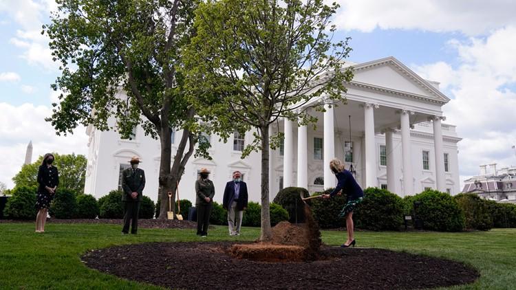 Jill Biden plants tree as White House readies for family cat
