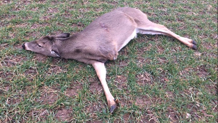 Local deer hunters had formed a pact to leave the three-legged deer alone, Indiana's Department of Natural Resources says.