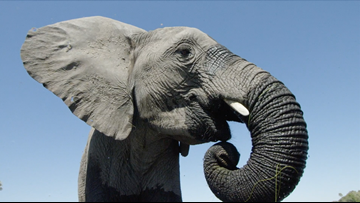 Dive into the last wetland wilderness with these elephants