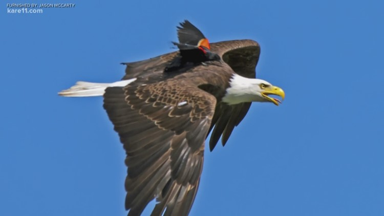 The scoop behind the 'eagle uber' photo