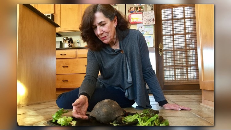 Jeanna Smith spends time with George, her pet tortoise