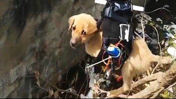 Man rescues puppy using drone