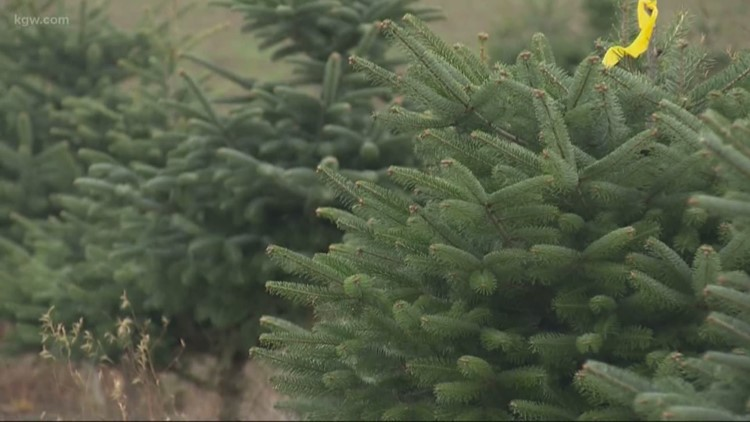 Christmas tree shortage in Oregon means more expensive trees