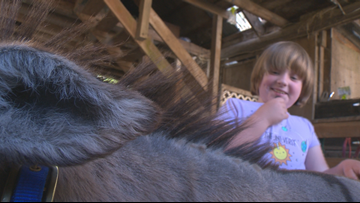 Washington girl with autism shares special bond with rescued donkeys