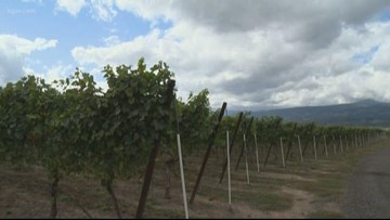 Hood River Valley winemakers worry about smoke taste