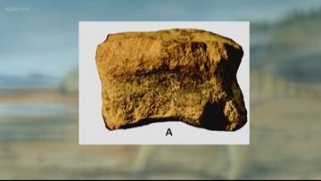 'It's like Christmas': Scientist finds rare dinosaur bone in Oregon