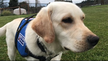 Washington family gets diabetic alert dog for toddler thanks to donations