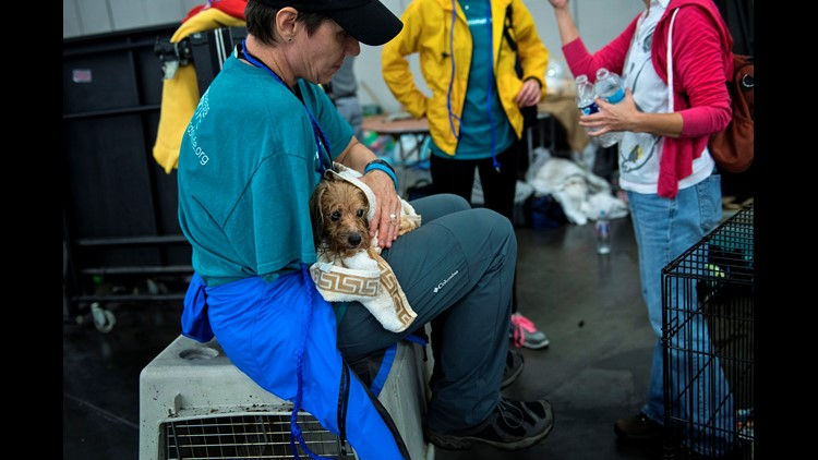 <p>Finding Rover, Petco Foundation, and the Houston SPCA are teaming up with an innovative tool to reunite Harvey victims with their pets.</p>