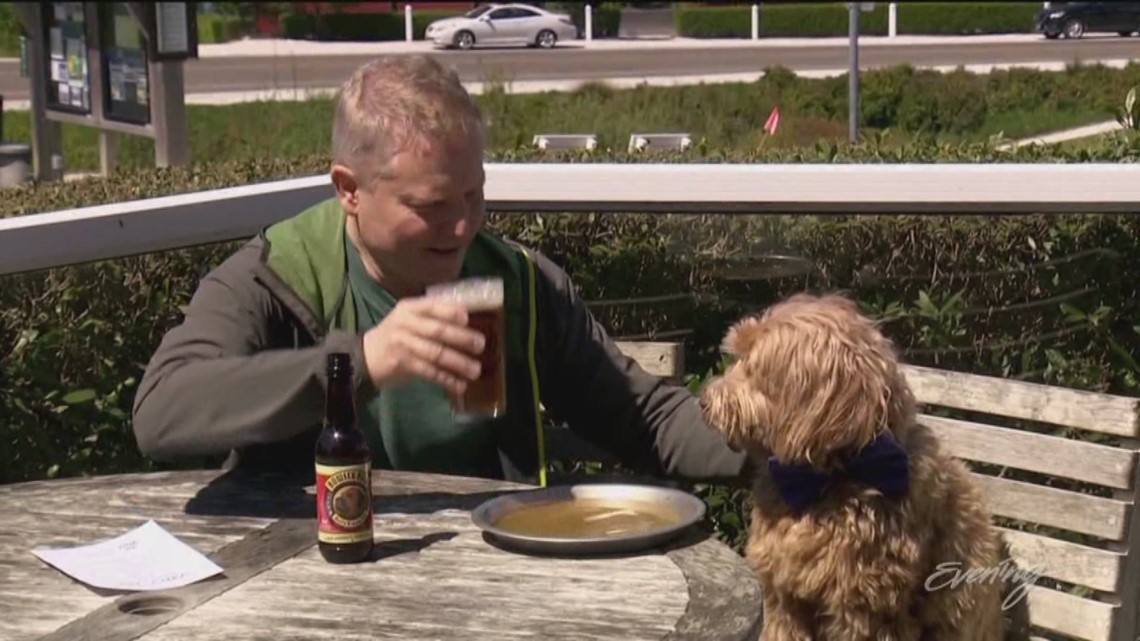 This pet-friendly getaway is a day at the beach - KING 5 Evening