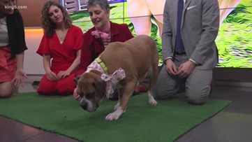 Meet Peaches, our canine rescue of the week
