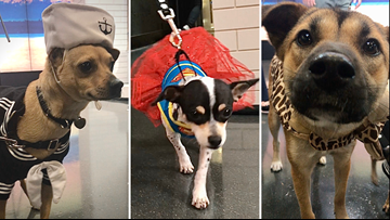These Halloween costumes for dogs are spooktacularly cute