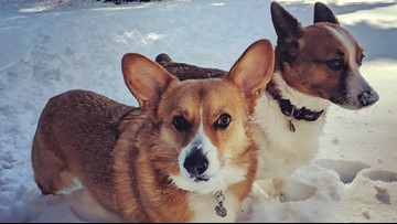 Protect your pets in the winter weather