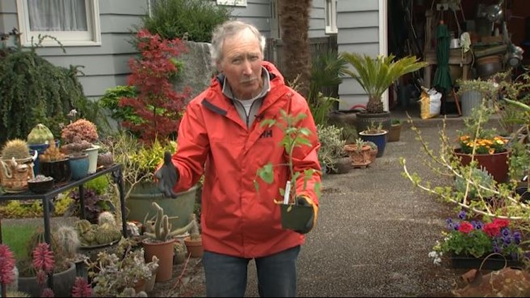 A gardening guru's tomato survival guide