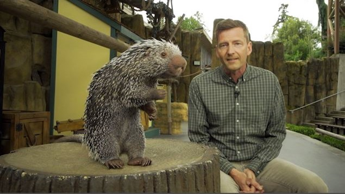 Zookeeper Week at Point Defiance Zoo & Poulsbo's Greenhouse Airbnb   Full Episode - KING 5 Evening