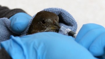 How to help birds injured in the Puget Sound snowstorm