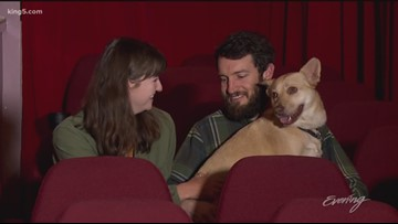 Tacoma's Grand Cinema goes to the dogs - KING 5 Evening
