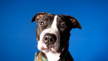 Milo the dog looking for a great new home