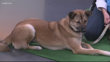Meet Michelle Fairley, a dog who would love a new home