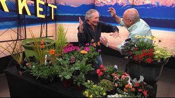 Garden fight! Ciscoe Morris vs. Ed Hume - who can design the best Mother's Day flower pot?