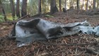 Stolen plane clean up responsibly on Ketron Island