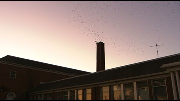 Thousands of swifts swarm in Monroe, Washington - KING 5 Evening
