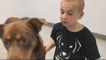Roman 'the rescuer' is back helping dogs