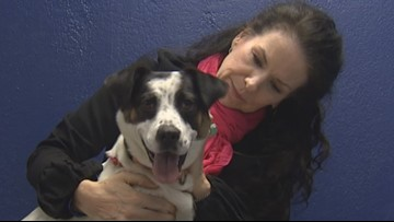 Dogs and humans find each other at this Edmonds lounge