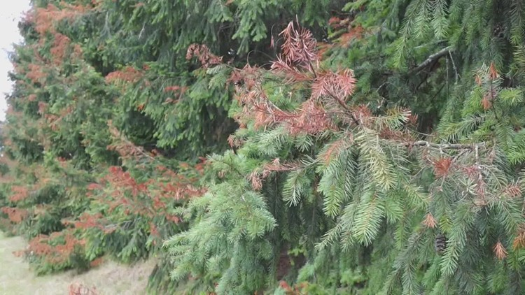 Here's why you should check on the health of your trees before fall weather sets in