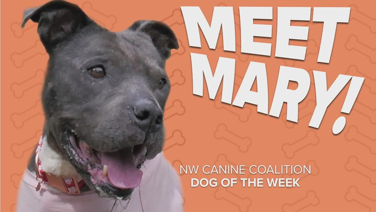 Canine Rescue of the Week: Mary