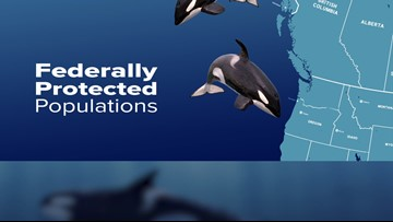 Southern Resident orca population at 75 killer whales