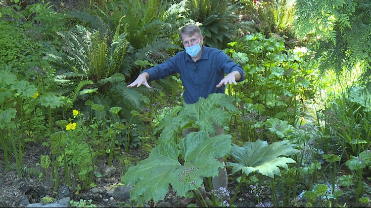 Heronswood Garden's new  director trades TV for tranquility