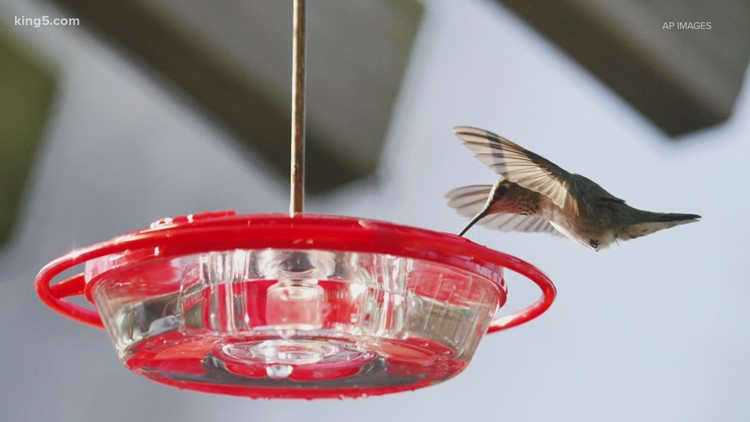 What to know before putting your bird feeder back up in Washington