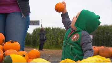 Favorite Washington pumpkin patches for fall