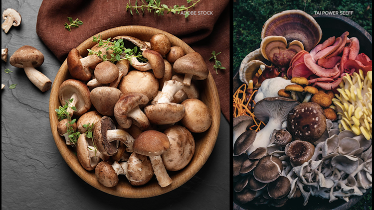 What's the deal with the mushroom trend?!