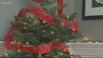 Holiday safety tips: Keeping your Christmas tree from catching fire