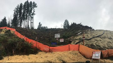 Mukilteo neighbors want trees re-planted after clear cut if development fails