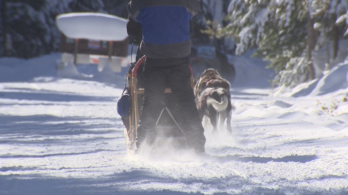 Take a ride with the 'flying furs' of Northwest Dogsled Adventures