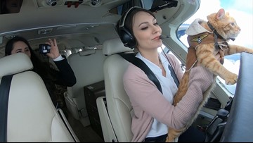 Sabino the Flying Kitty soars over Seattle